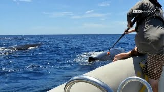 How To Attach a Camera to A Whale | Planet Earth: Blue Planet II | Saturdays @ 9/8c on BBC America