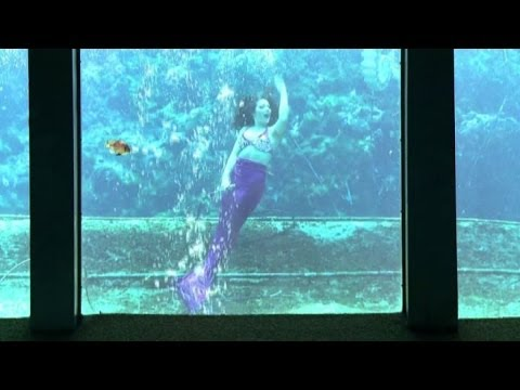 Il Parco Acquatico In Florida Dove Si Incontrano Le Sirene