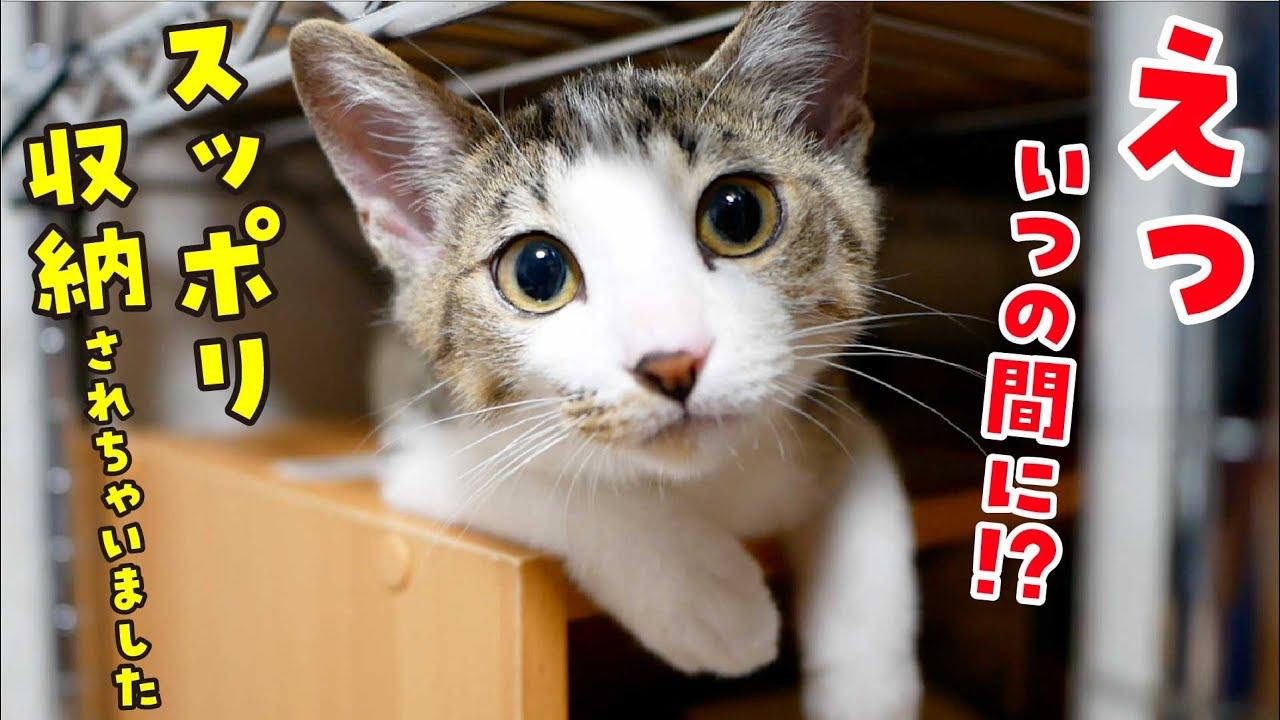 物心がついた子猫が驚きの行動を起こしちゃいました