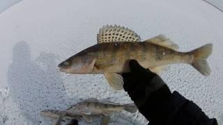 видео Рыбалка на берша