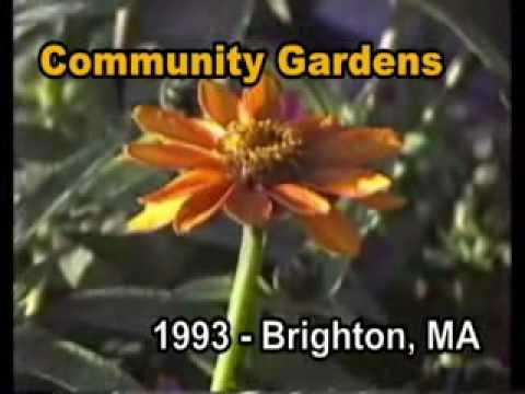 Boston: (Brighton) Herter Community Gardens - 1993