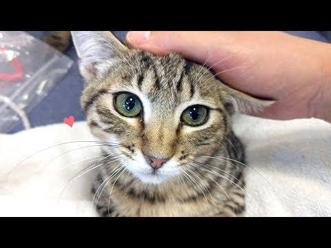 보호소에 위험군으로 분류된 고양이들의 공통점!