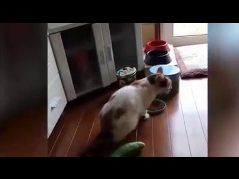 Funny Cat Fails Compilation 2017 Try Not To Laugh   Best Epic Cat Fails