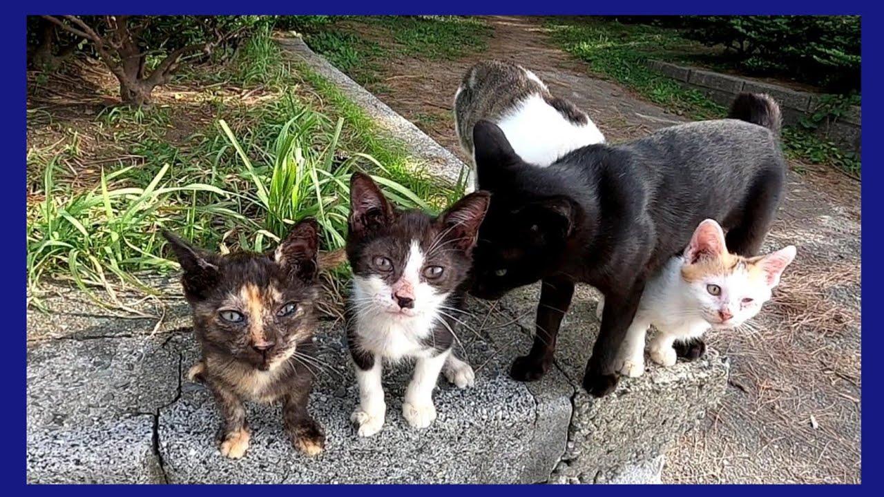 クロネコママと子猫達