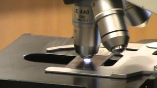 oil immersion