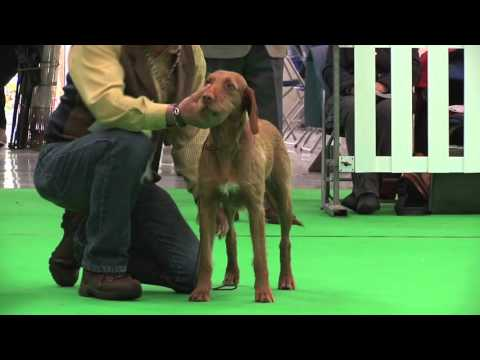 WELKS Dog Show 2016 - Gundog group FULL