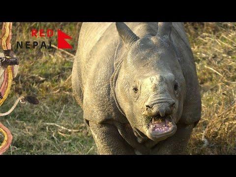 RedNepal #11 Слоны и другие животные национального парка Читван