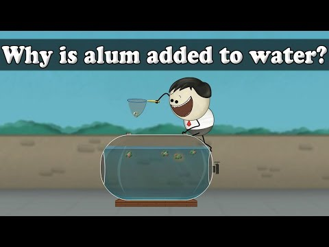 Water Purification - Why is alum added to water?