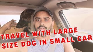 How to travel with Dog in a small car