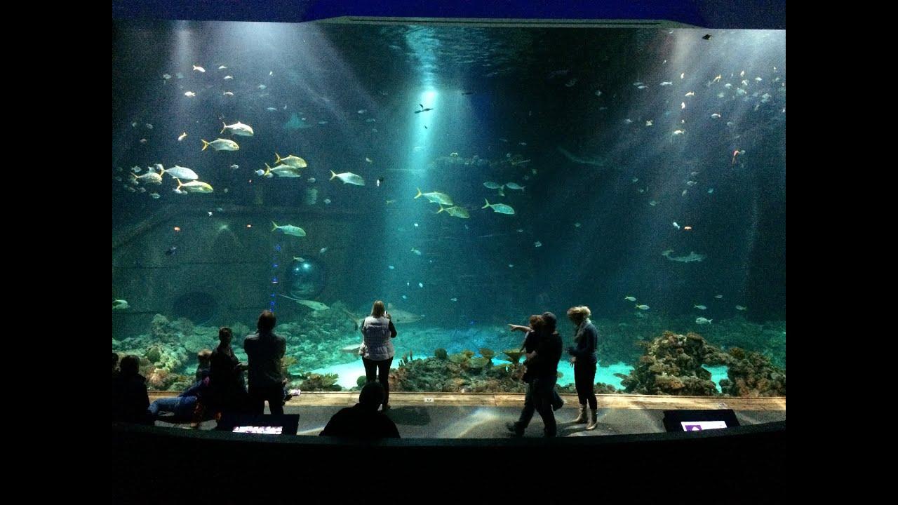 The Next 100 Years >> Tropen-Aquarium Hagenbeck, Hamburg, Germany - YouTube