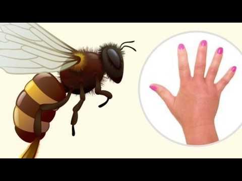 Jerawat, Bisul, Borok, Gigitan Serangga, Luka Bakar Dan Infeksi Bakteri Ini Obatnya