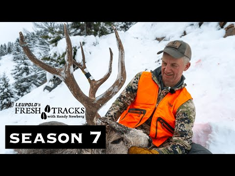 Public Land Mountain Buck | Montana Mule Deer (Amazon Episode)