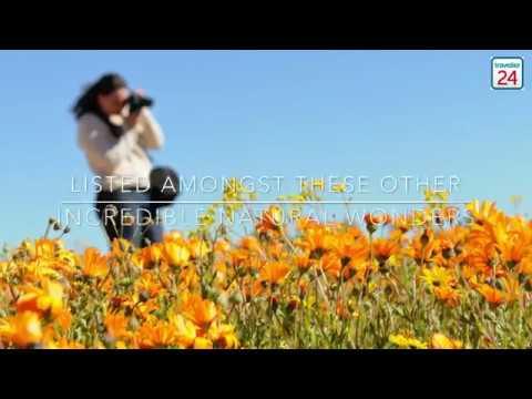 SA's Namaqua paradise in World's Best Flower regions