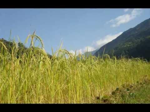 Indo-Blues-Folk-Country-Gospel-Fusion song 'No More'