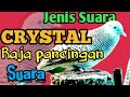 Perkutut Lokal Jantan Jenis Suara Crystal Memanggil Mastering Handal Untuk Semua Jenis Perkutut  Mp3 - Mp4 Download