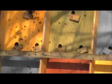 инвентарь пчеловода от