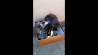Котята играют