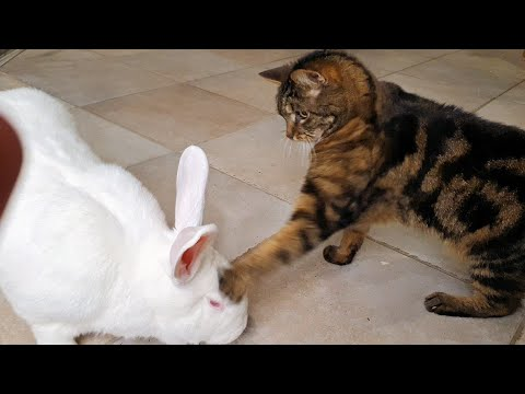 When Things Go Wrong 4 – Funny Pet Blooper Compilation