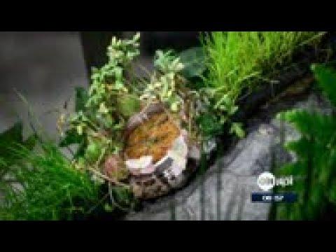 عرض ساعة نباتية مصنوعة من الزهور  - نشر قبل 2 ساعة