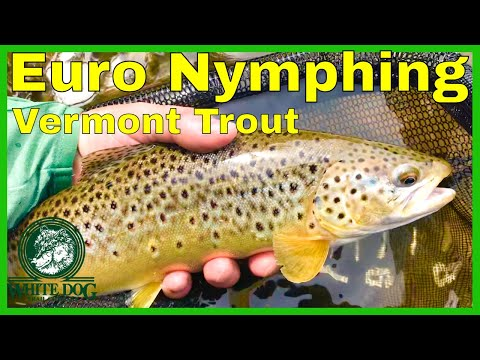Euro Nymphing In Vermont - 2018 Fly Fishing