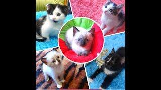 Чудесные котята в добрые руки. Новосибирск.
