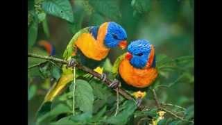 Olive et Moi - Les oiseaux du bonheur