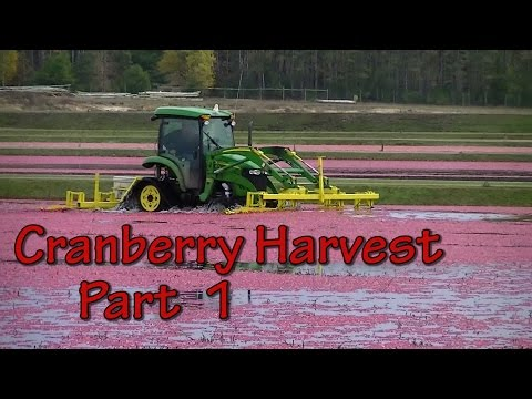 """Sights and Sounds of a Wisconsin Cranberry Harvest """"Part 1 of 2"""""""