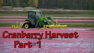 "Sights and Sounds of a Wisconsin Cranberry Harvest ""Part 1 of 2"""
