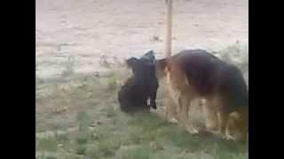 собака и секс