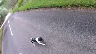 Biker Rescues a Jack Russell On His Travels