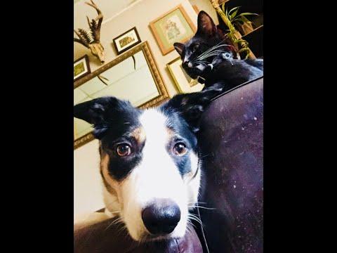 Dog Tricks ,Kimbo on bin duty