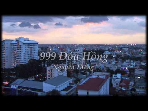 999 Đóa Hồng - Nguyễn Thắng