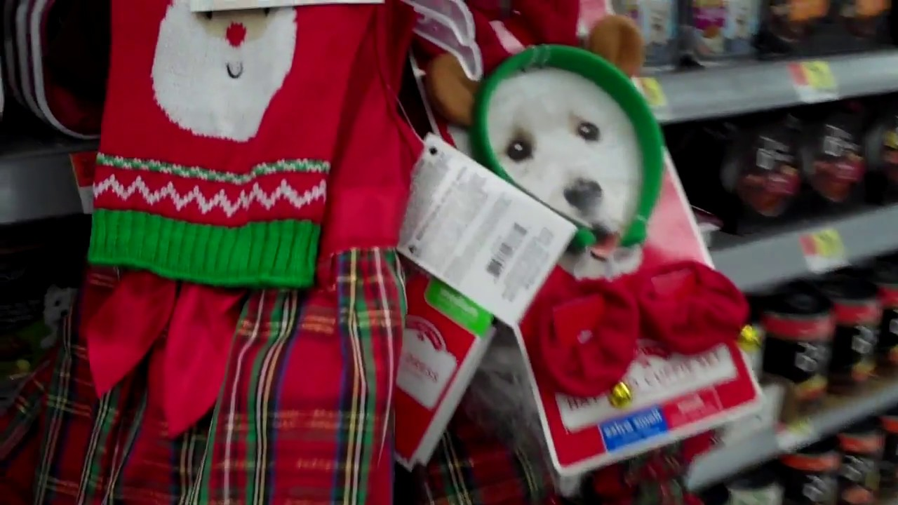 Christmas Hats For Dogs.Christmas Hats For Dogs At Walmart 2017
