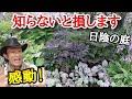 【日陰の庭のお手本です】園芸店長が日陰のお庭の見本 萌木の村のポールスミザーの庭を解説します。ガーデニングに悩む方必見です!  japan garden