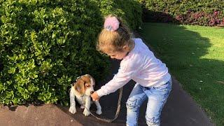 Наша Собачка. Мы купили Собаку. Малыш Бигль. Арчибальд несносный пес. Видео для детей. Детский канал