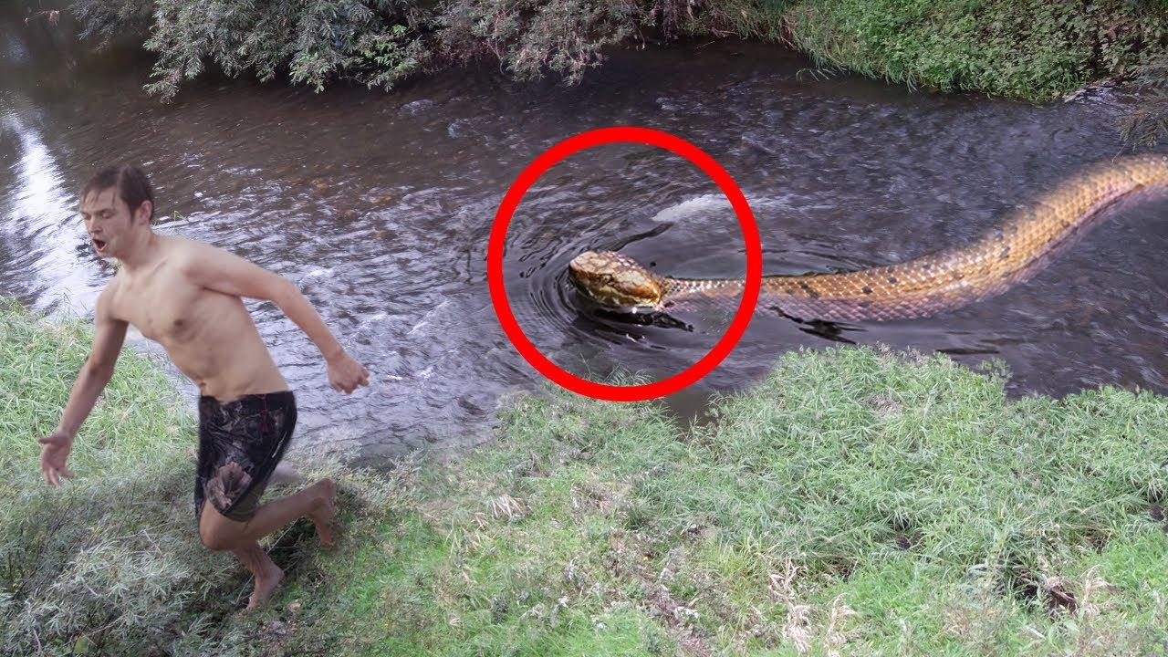 10 Scariest Snake Encounters!