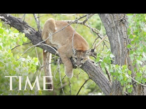 A Runner Fought Off And Killed A Mountain Lion During An Attack | TIME