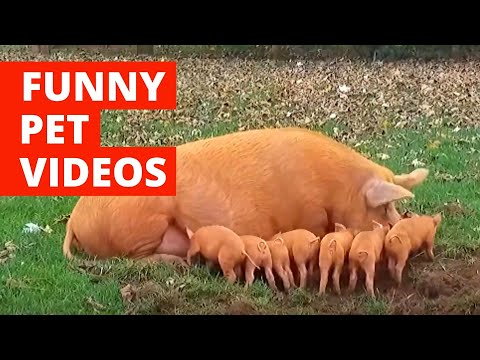 Funny Animal Bloopers (2020) Funny Pet Videos #1
