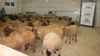 محمد كيودع علي من بعد ما فرق 70 حولي هو وخوتو والأم ديالو
