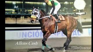 Allens Cash SI 117 ( Shazoom SI 102-Allens Cashmere ( TB ) Por Allens Prospect ( TB )
