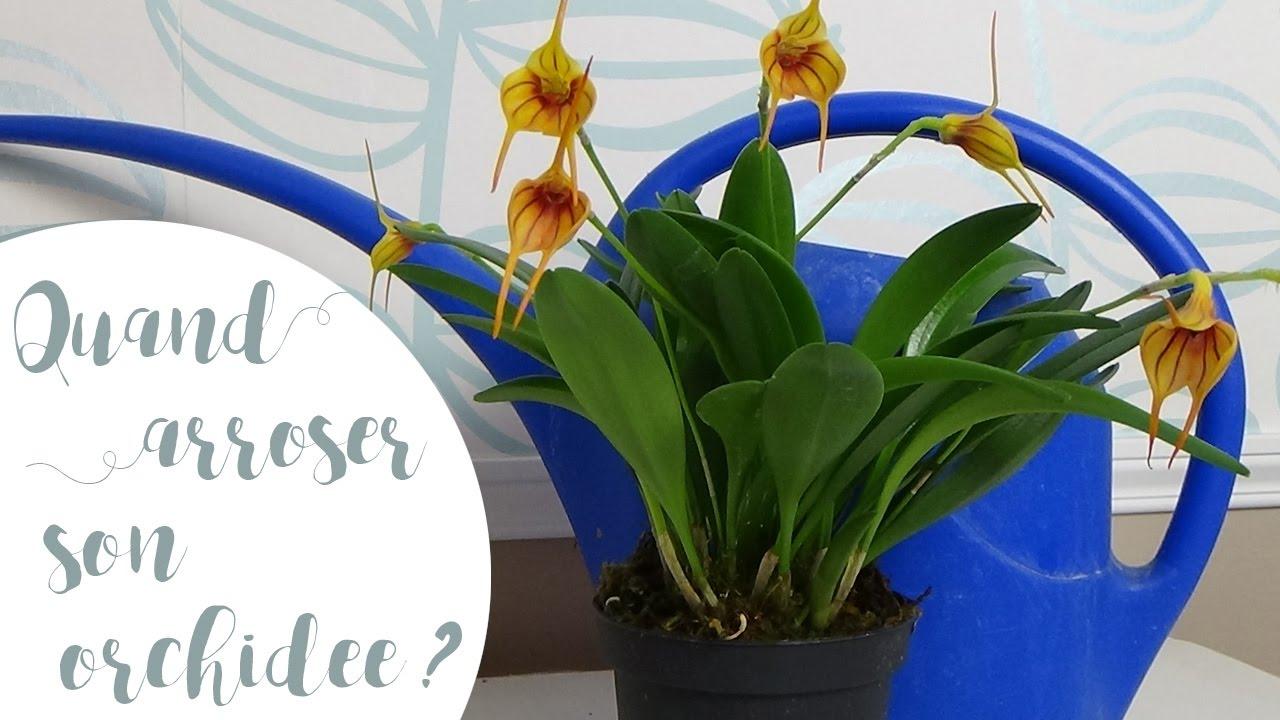 Quand arroser les orchid es mon astuce pour ne plus se - Quand rempoter une orchidee ...