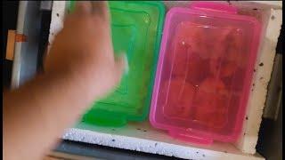 видео где купить термос для еды