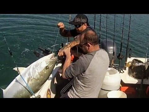 Big bruiser 41kg Yellowtail  Kingfish. Port Augusta South Australia