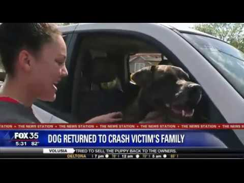 "Missing dog ""Taz"" reunited with car crash victim's family"