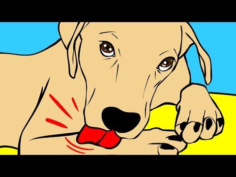 Почему собаки лижут лапы, и еще 29 вопросов о собаках
