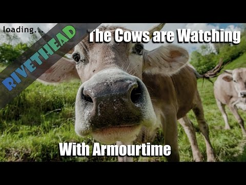 """The Cows Are Watching -With Armourtime """"Getting licked is bad"""" 