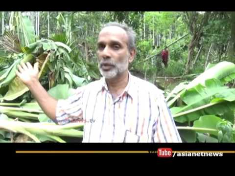 Anti-Socialist  destroyed crops, police starts enquiry