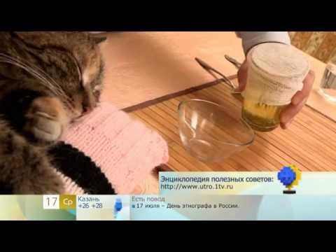 Можно ли промыть глаза коту чаем