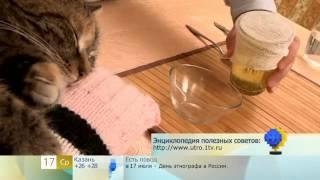 Как промыть кошке уголки глаз