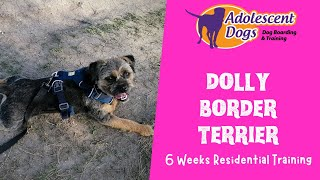 Dolly the Border Terrier   6 Weeks Residential Dog Training
